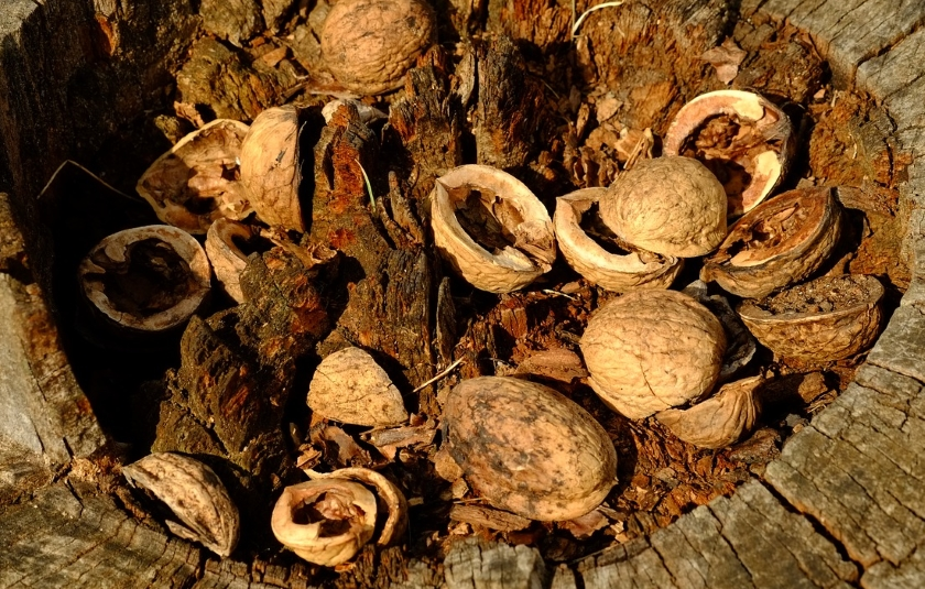 Ořechové skořápky