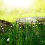 Jak si v létě udržíme zdraví a zachováme energii? Část 1.