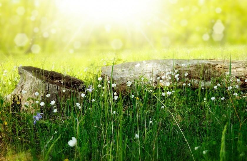 Jak si v létě udržíme zdraví a zachováme energii