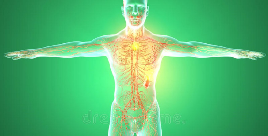 lymphatic-system-human-body