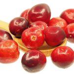 Abeceda léčivých rostlin – Brusnice brusinka